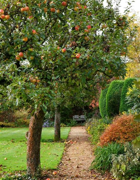 home fruit trees the apple trees to for a home garden wsj