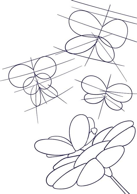 How To Draw A Butterfly For