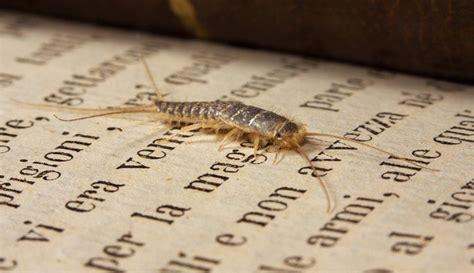 insetti da casa la paura degli insetti dentro casa my cms