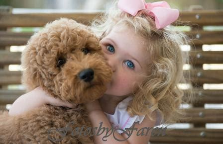 labradoodle puppies for sale in sc danmar labradoodles labradoodle puppies for sale in sc
