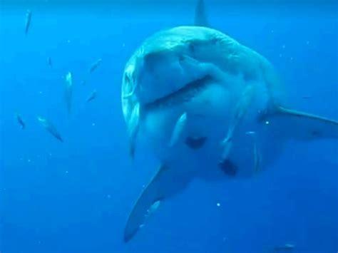 video of shark dragged behind boat shark gets dragged behind a boat in horrific video