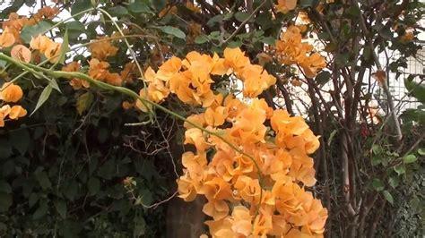 fazer plantas como fazer mudas de primavera jardinagens plantas ornamentais