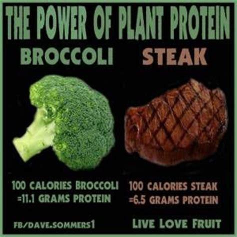 Protein Meme - 40 best images about vegan memes on pinterest jokes