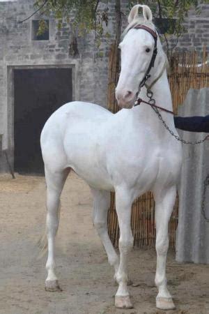 beautiful white horse animals & pets images & photos