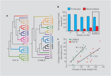 the human gut microbiome and obesity microbewiki
