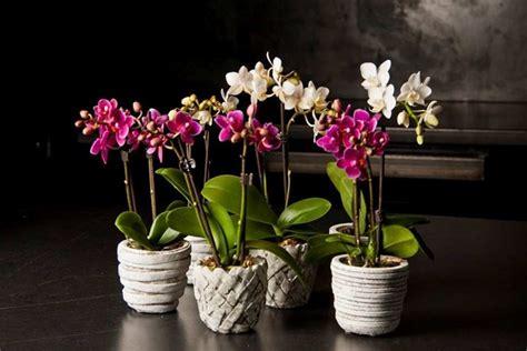 fiori in vaso da interno piante da appartamento piante appartamento