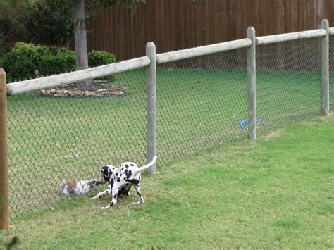 best fence for dogs 25 best ideas about fence on diy fence fence ideas and wire fence