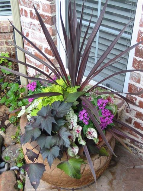 container gardens for sun container plants sun and plants on