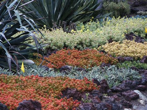 succulent ground cover in colors huntington library