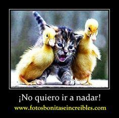 imagenes de animales chistosos para facebook 1000 images about gatitos chistosos on pinterest gatos