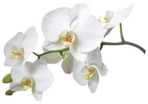 Flower Coupon Codes - hotel r best hotel deal site