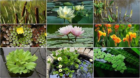 the best plants for a water garden 15 flowers for 21 awesome pond plants for your dream water garden