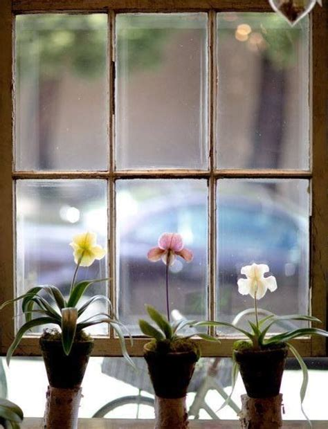 fioriere per davanzale finestra fioriere per davanzale finestra 28 images fioriera da