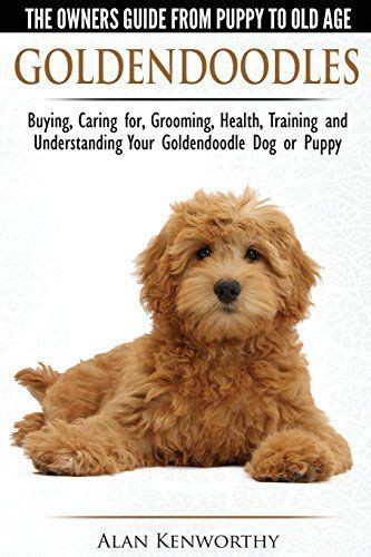 mini goldendoodles health the world s catalog of ideas