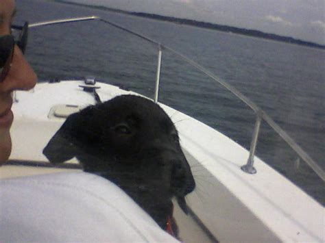 boat names with dog need a boat name and a dog name the hull truth boating