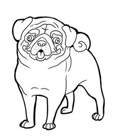 pug colouring pages