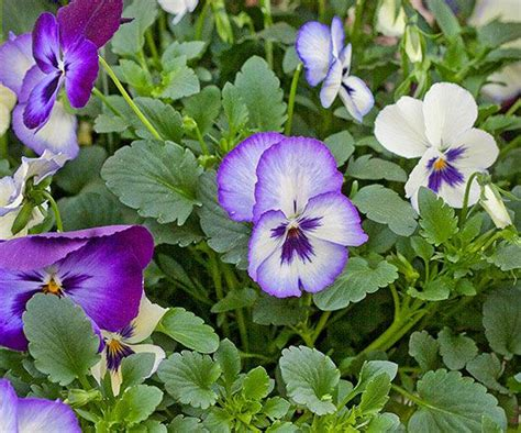 flowering perennials from spring to fall