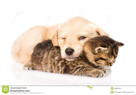 sleeping baby and puppy baby puppy and kitten sleeping together isolated stock photo image 55866738