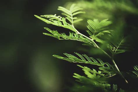 green fern branch curling  stock photo