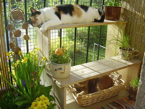 Cat Window Patio Gardenless Gardener Life On The Balcony