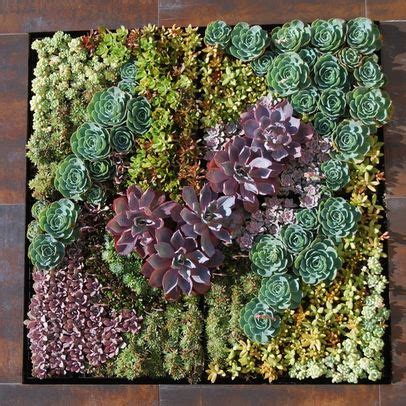 Living Walls And Vertical Gardens Page 2 Of 11 Living Art How To Make A Succulent Wall Garden