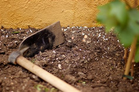 urine in dogs how to neutralize urine in soil remove smell soil amendments