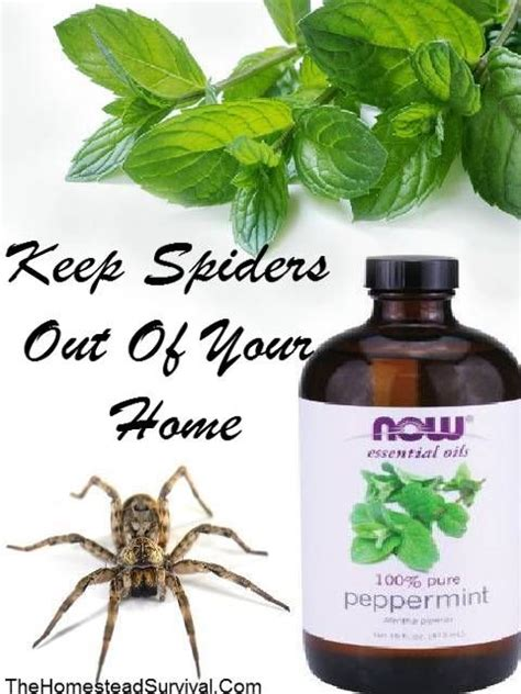 Keep Spiders Out Of Shed by 25 Best Ideas About Spider Spray On Spider