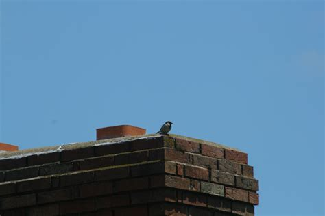 How To Get A Bird Out Of Your Fireplace how to get a bird out of a chimney maker masters