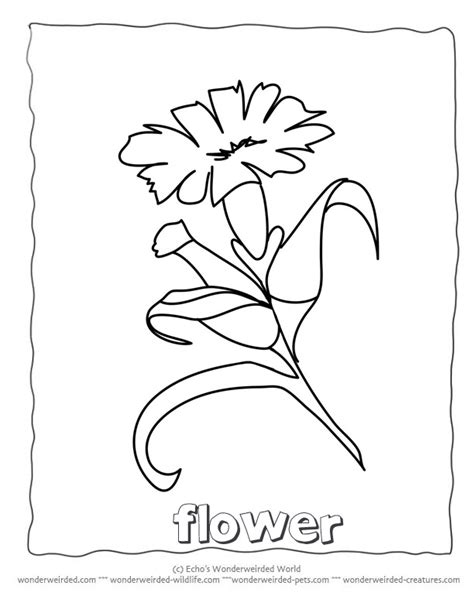 coloring pages of flowers with names html color names az colorare
