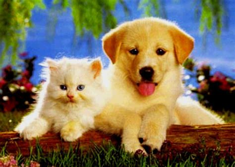 baby puppies and kittens baby puppy kitten baby animals photo 19796360 fanpop