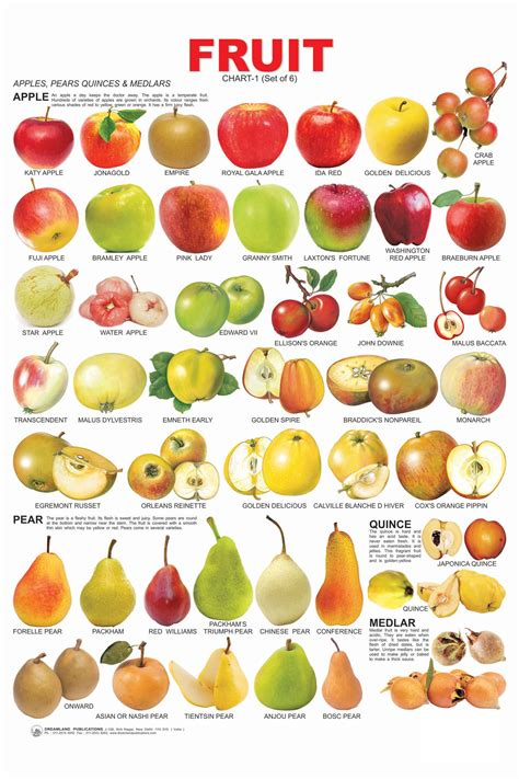 6 fruits name yellow fruit names pictures to pin on pinsdaddy