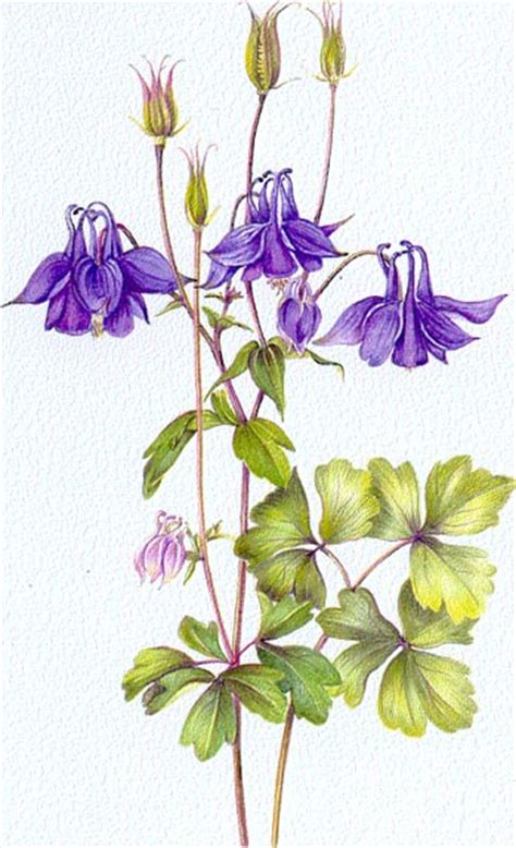 the botanical art files welcome to art plush gallery of contemporary work by