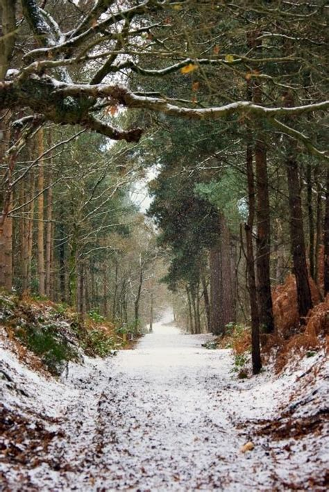 christmas trees delamere chester 360 176 delamere forest