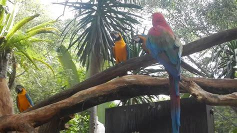 Kaos Burung Scarlet Macaw gambar perlengkapan seni sketsa faber castell 48 pensil