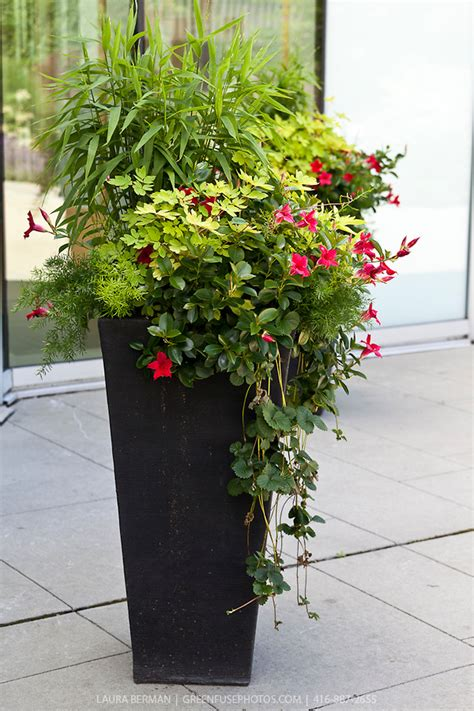 Large Container Gardening Ideas Planting In Large Containers Decorative Planting In Large Containers Greenfuse Photos