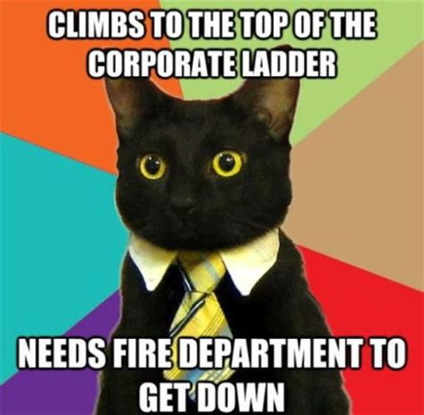 Business Cat Meme - work meeting meme memes