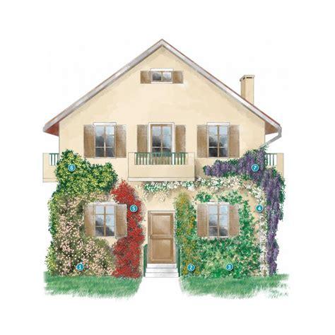 ricanti fioriti resistenti al freddo rinnovare la facciata della casa con le piante ricanti