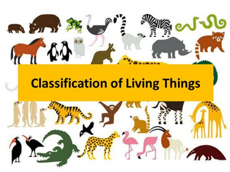 new year animals ks2 ks2 classification of living things by supershell