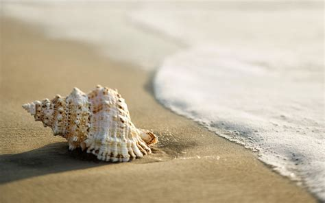 shell wallpaper loving2you beautiful natural hd wallpapers