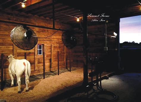 cattle cool room show barn showcase horn livestock show cattle horns and barns