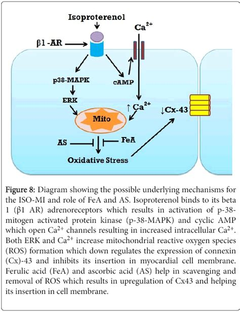 modulation  ecg myocardial oxidative stress markers