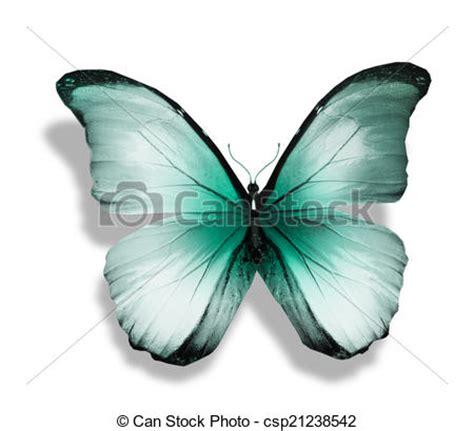 imagenes de mariposas azul turquesa dibujos de azul mariposa turquesa aislado blanco