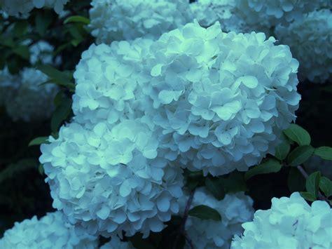 big blooms small flowers ramblin through dave s garden
