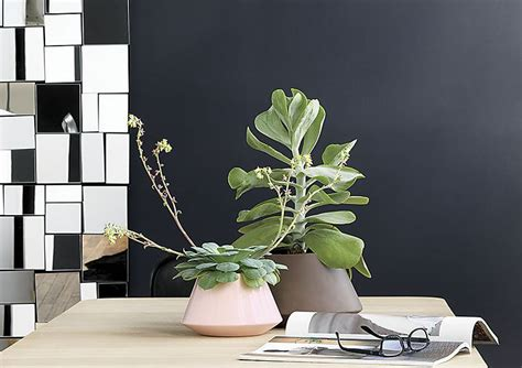 Cb2 Planters by 20 Last Minute S Day Gift Ideas