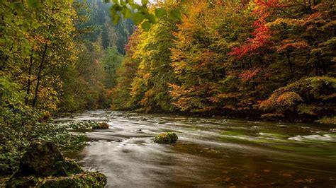 Rote Blätter Baum 4770 by Die 75 Besten Herbstbl 228 Tter Hintergrundbilder
