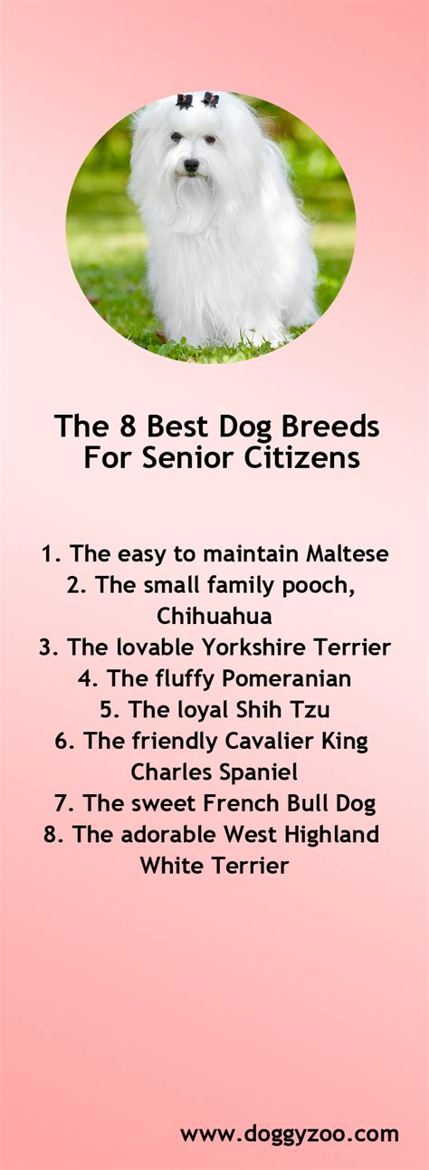 best breeds for seniors the 8 best breeds for senior citizens doggyzoo comdoggyzoo