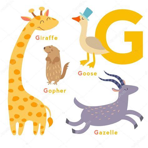 imagenes en ingles con la letra g conjunto de animais de letra g vetor de stock 169 coffeee