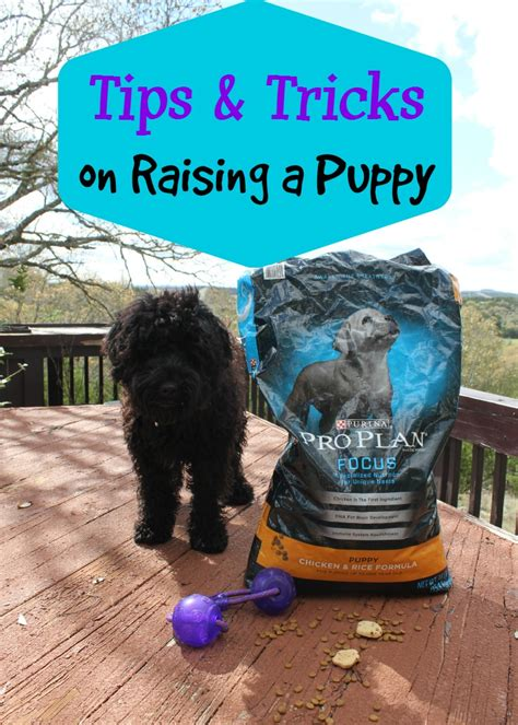tips for raising a puppy tips and tricks on raising a puppy house of fauci s