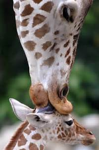 Cute Baby Animals Hugging 19 Lovely