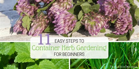 Herb Gardening For Beginners by Easy 11 Steps To Container Herb Gardening For Beginners